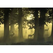 Rompecabezas Heye De 1000 Piezas: Magic Forests: Deer