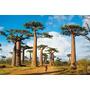 Rompecabezas Clementoni X 1000 - Madagascar