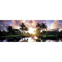 Rompecabezas Heye 2000 Piezas Panoramico: Palm Trees