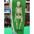 Esqueleto Humano Para Armar 46 Cm De Alto