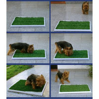 Alfombra Sanitaria Perros Cachorrro 50x50 Oferta! Local/once