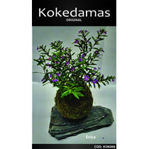 Kokedamas Original - Erica - Kok Arte Natural