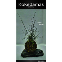 Kokedamas Original - Junco Twistter - Kok Arte Natural