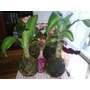 Plantas Kokedamas Desde $ 40!