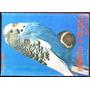 Cotorritas Australianas - C. Selva Andrade - Ed. Albatros