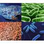 Desinfectante Bactericida Premium Rinde 100 Lts.