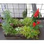 Maceta De Tronco Madera Con Diferentes Plantines Y Flores!