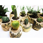 Maceta Cerámica Artesanal Cactus Y Suculentas Stone Hollow