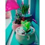Cactus, Crasas Y Suculentas En Vasijas De Barro Número 6