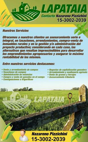 Maiz - Soja - Alquiler Y Compra De Campos - Aceitunas