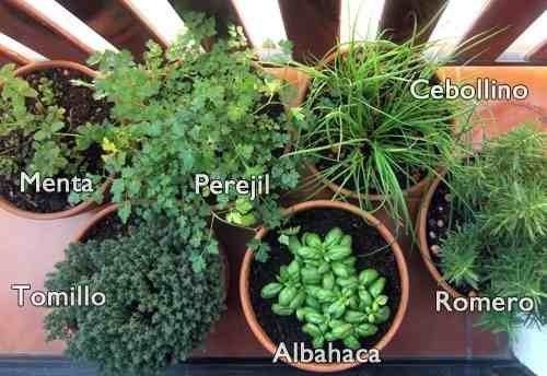 El cuidado de las plantas y el jardin 3 01 16 10 01 16 for Huerta de aromaticas en macetas