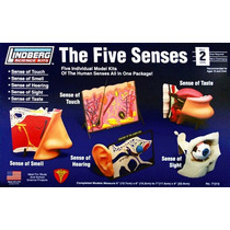 The Five Senses Marca Lindberg