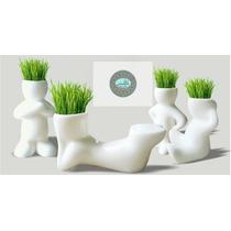 Hair Man Plant- Hombrecito Planta