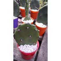 Mini Cactus Souvenirs Fiestas Eventos Navidad Regalo Cumples