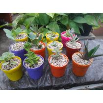 Souvenirs Suculentas Cactus Regalos Empresariales Oferta