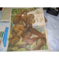 La Obra Revista Educacion Poster Mono Chimpance Esqueleto