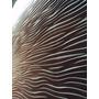 Paneles Decorativos 3d -diseño Y Antihumedad