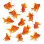 Goldfish Chico Surtido Elegi De Mundo Acuatico
