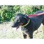 Arsat Hermoso Perro En Adopcion