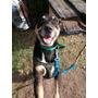 Perro Guemes En Adopción!!