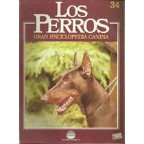 Enciclopedia Canina Perro Boxer 33 Reglamento Internaciona