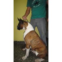 Cachorros Boxer C/pap Fca, Excelentes !!!