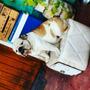 Bulldog Ingles Para Servicio