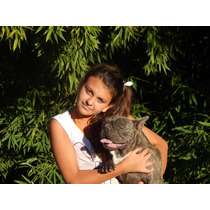 Bull Dog Frances Blue (servicio)