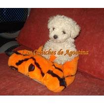 Caniches Hembras.toy. Mini .reales !...con Ajuar De Regalo