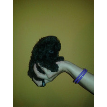 Hermosa Cachorrita De Caniche Micro Toy