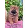 Chow Chow, Hembras De 70 Días. Fca. (inmejorable Calidad)