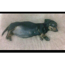 Cachorros Salchicha-daschud-téckel. (mini-mini)
