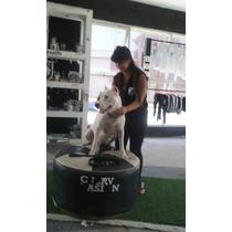 Cria De Dogo Argentino Exelente Genetica Wpp: 3875035299