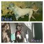 Cachorros Pitbull Black Y Red Nose Excelentes