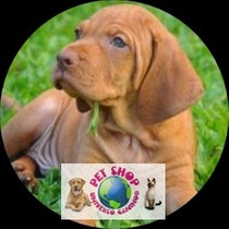 Cachorros Vizsla O Braco Hungaro Con Fca Bs As Cap. Fed.