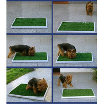 Baño Interior Perro Pasto 50x50 Pichín Acá.oferta.local Once