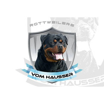 Vom Hausser Kennel -cachorros Disponibles- Rottweilers