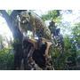 Jaguar De Gran Realismo Parado Sobre Un Tronco