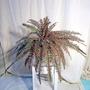 Planta Artificial - Helecho Fall Ruffle - Regalosdeco