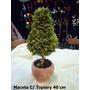 Maceta Con Topiary