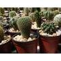 Combo 5 Cactus Medianos. Muchas Variedades.