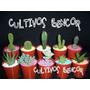 Cactus Y Crasas Surtidos Por 10 Unidades