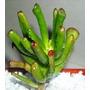 Cactus Y Otras Suculentas Maceta Nº 6