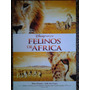 Felinos De Africa 2168 Disney Afiche De 1 X 0.70