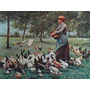 Reproduccion Italiana: Pollos Farm Works 70x50