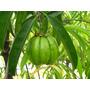 Garcinia Cambogia 1 Kilo