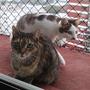 Instalación Redes Para Gatos Y Perros. Con Cotización Previa