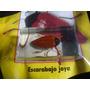 Escarabajo Joya. Coleccion Insectos. Nuevo