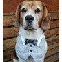 Ropa Para Perros Mascotas Chalecos Pechera