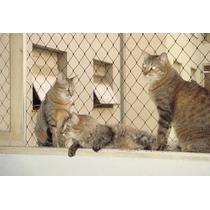 Redes Mascotas, Redes Perros, Redes Gatos, Proteccion Mascot